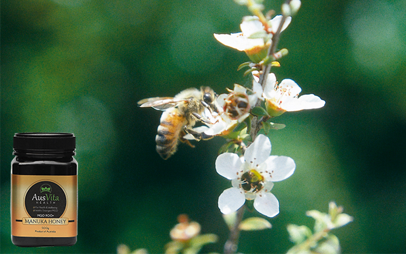 Understand the Manuka Plant and its requirement in producing the Manuka Honey!